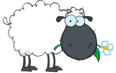 Die schwarzen Schafe im Yoga